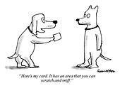 Animals and Pets Cartoons