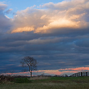 Lone tree with dramatic clouds and sky at sunset in Loudoun County, VA.