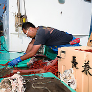 Hasegawa-san father and son team working on their fishing vessel. Here the son is organizing the day's catch of deep-sea king crabs.