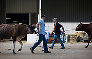 Cow owners cross paths outside the exhibition halls during the World Dairy Expo in Madison, Wisconsin, U.S., October 3, 2018.  REUTERS/Ben Brewer
