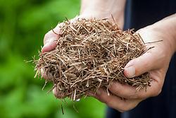 Handful of strulch