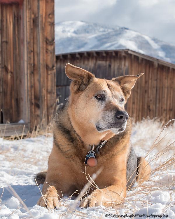 Pet Portraits, Mountain Backdrop