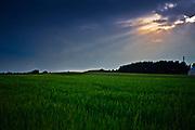Łąki nad Biebrzą, okolice Goniądza, Polska<br /> Meadows over Biebrza, near Goniądz, Poland