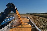 Grain farmers harvest amid Trump's trade war