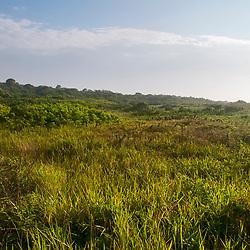 """""""Restinga (Vegetação) fotografado em Guarapari, Espírito Santo -  Sudeste do Brasil. Bioma Mata Atlântica. Registro feito em 2008.<br /> <br /> <br /> <br /> ENGLISH: Biome restinga<br />  photographed in Guarapari, Espírito Santo - Southeast of Brazil. Atlantic Forest Biome. Picture made in 2008."""""""