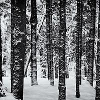 Winter shots 2013 K4IIs