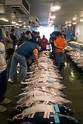Ahi, Yellow fin tuna, Honolulu Fish Auction, Pier 35, Honolulu harbor, Oahu, Hawaii