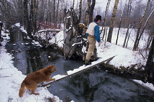 Troy Hyde wading with dog crossing tree bridge over small creek to fishing spot in Gallatin River. Montana.
