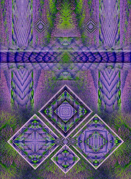 Derivative image from a photo of Gray Marsh Lavender Farm, August, Olympic Peninsula, Sequim, Washington, USA