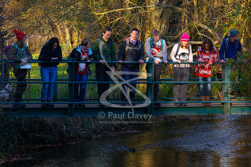 RAMBLERS ASSOCIATION: Ramblers association winter walks promotion. Pangbourne, Berkshire, November 19 2018.