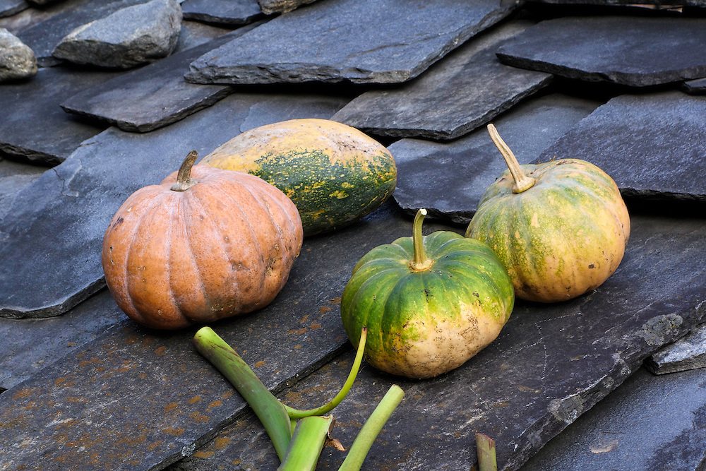 Squash curing on the roof of a house in the village of Nagjet, Nepal.