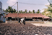 At a hair processing factory in Eluru in the state of Andhra Pradesh, temple hair is first soaked in caustic soda and shampoo over night then rinsed out the next morning and laid out to dry.