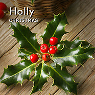 Pictures of Holly and Berries Christmas Festive Photos