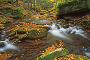 Autumn in Elk State Forest, Brooks Run, Cameron County, PA
