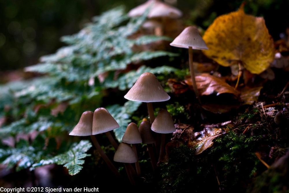 Paddenstoelen in de herfst - Mushrooms in autumn