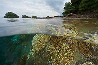 Split level  over/under view of reefs and islands.<br /><br />Canales de Afuera Islands<br />Coiba National Park<br />Panama
