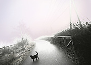Image of a black cat on a trail in Bellevue, Washington, Pacific Northwest by Andrea Wells