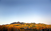 SHOT 9/28/12 7:02:40 PM - Aspen trees changing colors along Kebler Pass with the Anthracite mountain range as a backdrop just outside of Crested Butte, Co. Populus tremuloides, the Quaking Aspen or Trembling Aspen, is a deciduous tree native to cooler areas of North America and is generally found at 5,000-12,000 feet. The name references the quaking or trembling of the leaves that occurs in even a slight breeze due to the flattened petioles. It propagates itself by both seed and root sprouts, and extensive clonal colonies are common. Each colony is its own clone, and all trees in the clone have identical characteristics and share a root structure. (Photo by Marc Piscotty / © 2012)
