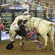 Bullrider Dave Cash of Lighthouse, Florida gets thrown off a bull during the 129th performance of the PRCA Silver Spurs Rodeo at the Silver Spurs Arena   on Friday, June 1, 2012 in Kissimmee, Florida. (AP Photo/Alex Menendez) Silver Spurs rodeo action in Kissimee, Florida. PRCA rodeo event in Florida. The 129th annual running of the cowboy event.