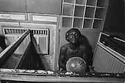 Lagos Musician - Nigeria