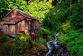 Northwest Emerald Forest