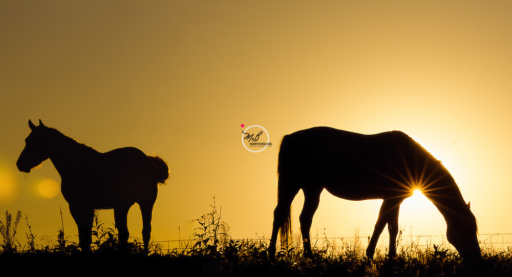 McGee Horses Sunset