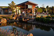 Saffron Fields Vineyard, Yamhill-Carlton AVA, Willamette Valley, Oregon