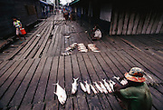 Fisherman sell their catch early in the morning on the elevated walkways that are the pedestrian roads of Agats, the largest town on the Arafura Sea in the Asmat, a large, steamy hot tidal swamp. Irian Jaya, Indonesia. Travel in this part of the world is by canoe or motorboat. Image from the book project Man Eating Bugs: The Art and Science of Eating Insects.