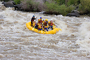 Rafters paddle fiercely on the Rio Grande River