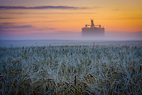 Sunrise over a field of wheat.  East of Calgary near Indus, AB.