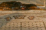 The Church of the Multiplication of the Loaves and Fishes, is a Roman Catholic church located in Tabgha, on the northwest shore of the Sea of Galilee in Israel. The modern church rests on the site of two earlier churches. The fish mosaic near the altar