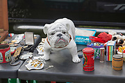 Close up of bulldog model and other memorabilia items on table top of car boot sale, Suffolk, England, UK