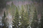 Forests and trees in Latvia Ⓒ Davis Ulands   davisulands.com