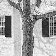 Limited Edition photograph of a tree outside of Mary Washington House along Lewis Street in Fredericksburg, Virginia.