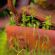 Spring From Decay - Pottsville - Merlin, Oregon - Lensbaby