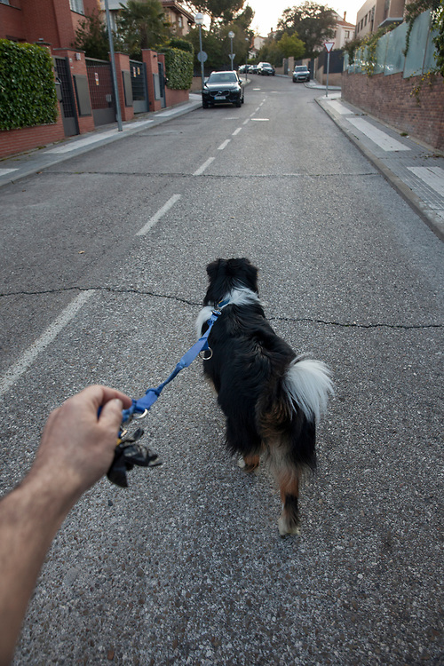 MADRID, SPAIN - April 14, 2020:  Walking the dog on April 14, 2020 in Majadahonda, Madrid, Spain, during the COVID lockdown.  More than 15,000 people are reported to have died in Spain due to the COVID-19 outbreak, although the country has reported a decline in the daily number of deaths. (Photo by Miguel Pereira/Getty Images)