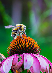 One Busy Bee!