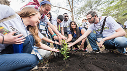 "7 March 2018, Arusha, Tanzania: On 7 March, students of GETI 2018 planted trees as part of a Service Learning day in their study programme. The trees mark a symbol of unity, and of working together for a greener planet, and a sustainable future. From 5-13 March 2018, the World Council of Churches organizes a Global Ecumenical Theological Institute (GETI) in Arusha, Tanzania, themed ""Translating the Word, Transforming the World"". The GETI brings together young theologians from around the world for an intense academic study course in Ecumenical Missiology. GETI 2018 takes place in connection with the Conference on World Mission and Evangelism, also organized in Arusha, Tanzania."