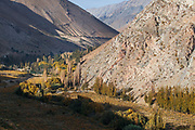 Grape vines in the Elqui Valley,Chile.