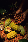 Mexico, Tabasco. the Route of Sacred Cacao