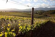 Vineyards in Elgin, Western Cape. Images by Greg Beadle