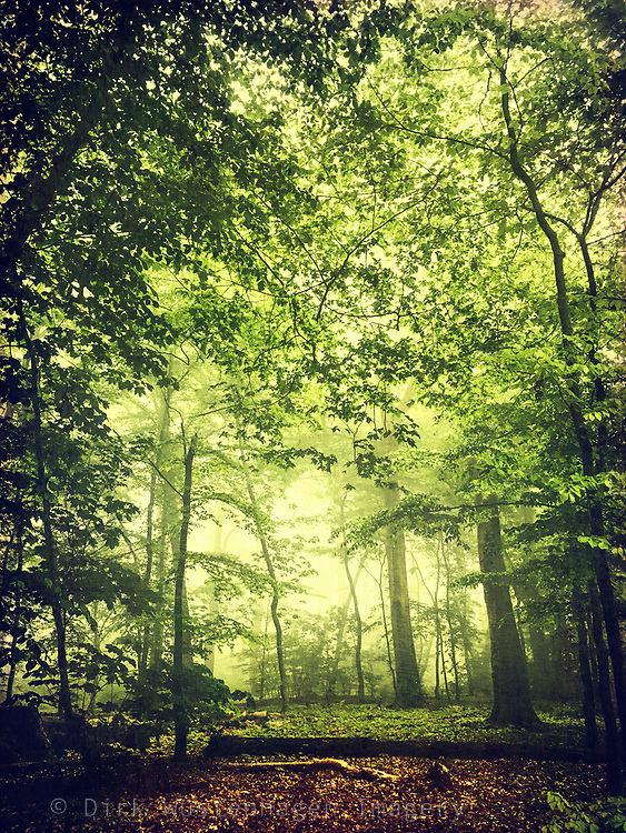 Deciduous forest in bright morning light - photograph edited with texture overlays
