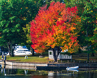https://Duncan.co/fall-color-at-the-marina