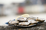 Kelly's Oysters at Galway International Oyster Festival<br /> Photo:Andrew Downes, XPOSURE.