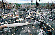 SLASH AND BURN RAINFOREST, Amazon, on Venezuala Brazil frontier, South America. Slash and burn cultivation by campesinos. primary rainforest is burnt down and the ashes fertilize crops for a few years until it is laid waste and used for cattle farming. Ecological biosphere and fragile ecosystem where flora and fauna, and native lifestyles are threatened by progress and development. The rainforest is home to many plants and animals who are endangered or facing extinction. This region is home to indigenous primitive and tribal peoples including the Yanomami and Macuxi.