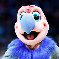 23 December 2016: Chuck the California Condor is seen during the Dallas Mavericks 90-88 victory over the LA Clippers, at the Staples Center, Los Angeles, California, USA.