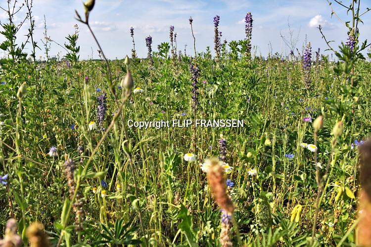 Nederland, Nijmegen, 23-6-2018 In het Goffertpark zijn stroken ingezaaid met wilde bloemen, veldbloemen, om bijen en andere insekten te lokken. Nijmegen is green capital of europe dit jaar en dit is een van de uitingen daarvan . Foto: Flip Franssen