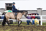 17/08/2017 Lucinda Kelly  at the Connemara Pony Show in Clifden. Photo:Andrew Downes, xposure