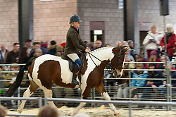 © Licensed to London News Pictures. 26/10/2018. Builth Wells, Powys, Wales, UK. Cobs go under the hammeras the sale of starts at 1.00pm on the first day of the 55th Autumn Cob Sale - the largest sale in the World of registered Welsh Cobs Section D, Welsh Ponies of Cob Type Section C and their Part Breds. The sale, held by Brightwells auctioneers, takes place over three days at The Royal Welsh Showground in Builth Wells, Powys, UK, attracting an audience of thousands of Welsh Cob enthusiasts worldwide. Photo credit: Graham M. Lawrence/LNP