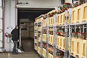 Duitsland, Straelen, 27-1-2019Een vrachtwagenchauffeur lost zijn lading bloemen uit het Westland op de moderne bloemenveiling Rhein Maas,  vlak over de grens bij Venlo.FOTO: FLIP FRANSSEN/ HOLLANDSE HOOGTEveiling